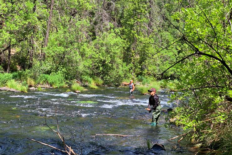 Two anglers fly fishing on Burney Creek
